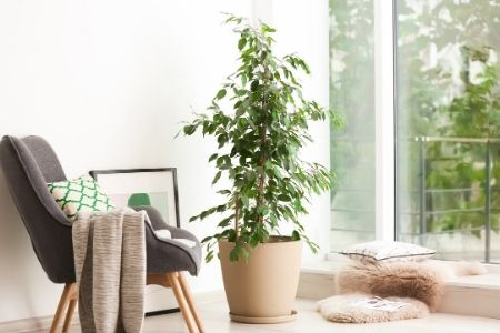 Ways To Maximize Natural Light in a Space